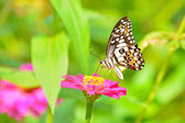 Butterfly on flower — Stok fotoğraf