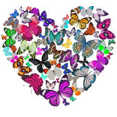 Heart of the butterflies — Stock Photo
