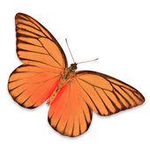Orange Butterfly — Стоковое фото
