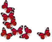 Pozadí motýl — Stock fotografie