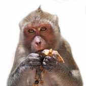 Monkey closeup — Stock Photo