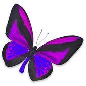 Beautiful Black and Purple butterfly — Stock Photo