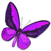 Purple butterfly — Stock Photo
