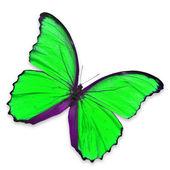 Green butterfly — Zdjęcie stockowe