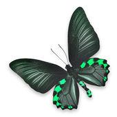 Beautiful black and green butterfly — Zdjęcie stockowe
