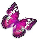 Mariposa rosa — Foto de Stock