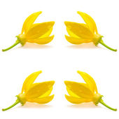 Ylang-Ylang Flower — Stock Photo