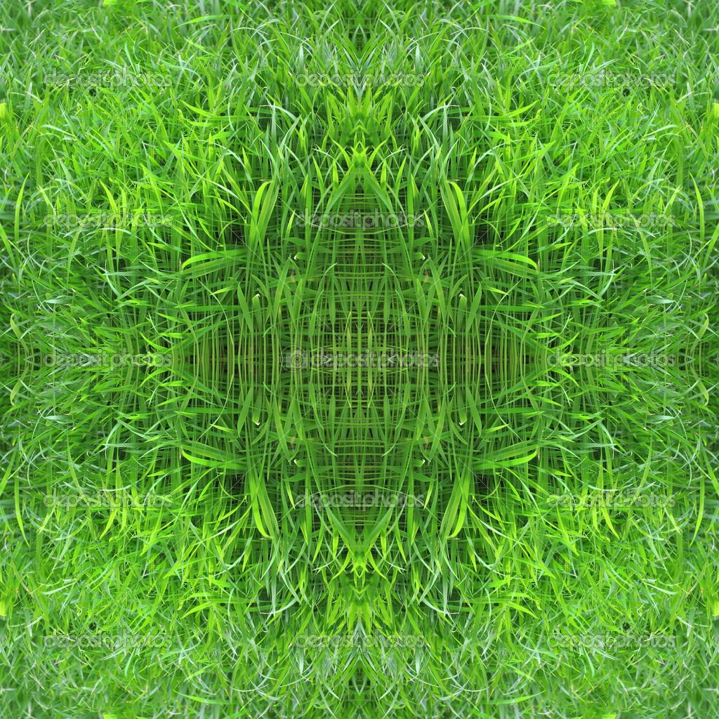 à partir de semis de riz vert美丽无缝的图案由绿色水稻幼苗—