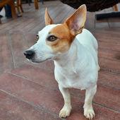 Dog on a floor — Stock Photo