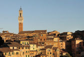 View of the city of Siena in Italy — Stock Photo