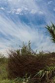 Landscape, Blue Sky and Bush — Stock Photo