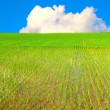 Stock Photo: Rice field and blue sky