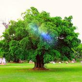 Drzewo z nowy liść wzrost wczesną wiosną osamotniony w fi — Zdjęcie stockowe