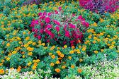 Flower garden background — Stock Photo