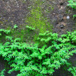 Stock Photo: Shrubs fern Background