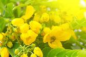 Vackra gula blommor — Stockfoto