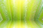 Yeni kırmızı yaprakları ile tropikal fern bitki — Stok fotoğraf