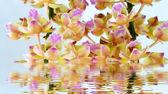 Orchid geïsoleerd op witte achtergrond — Stockfoto