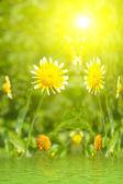 Beautiful yellow flower in field — Stock Photo