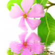 Stock Photo: Beautiful pink flower white background