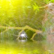 Stock Photo: Spider