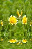 Mooie gele bloem in veld — Stockfoto