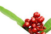 Beyaz izole kırmızı yabani meyve — Stok fotoğraf