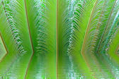 Tropical fern plant with new red leaves — Stok fotoğraf