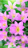 Pink flowers blooming — Stock Photo