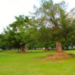 Park — Stock Photo #32324549