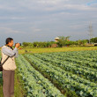 Stock Photo: Reporter take photo in field