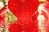 Red lily close up — Stock Photo