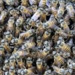 Beehive — Stock Photo #32393143