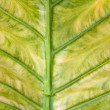 Leaf — Stock Photo #34172201