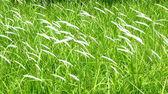 The grass — 图库照片