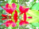 Flor vermelha — Fotografia Stock