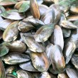 Mussel — Stock Photo #34461525