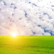 Green paddy and sky — Stockfoto