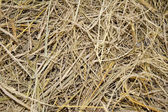 Dry straw after harvest — Stockfoto