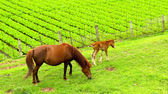 Horse grazing in a field — Stock Photo