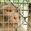 Sad monkey caged — Stock Photo