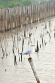 Group of seagulls holding on bamboo — Stock Photo