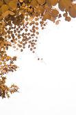 Leaf isolerad på vit bakgrund — Stockfoto