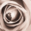 Romantic vintage rose. — Stock Photo
