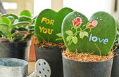 Heart shaped plant (Kerrii Hoya) — Stock Photo