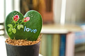 Herzförmige pflanze (kerrii hoya) — Stockfoto
