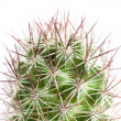 Close up of Cactus — Stock Photo