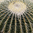 Closeup of a cactus  — Stock Photo