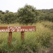 Stock Photo: Be Aware of Buffaloes sign