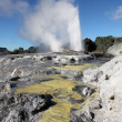 Rotorua Geysers - New Zealand — Stock Photo